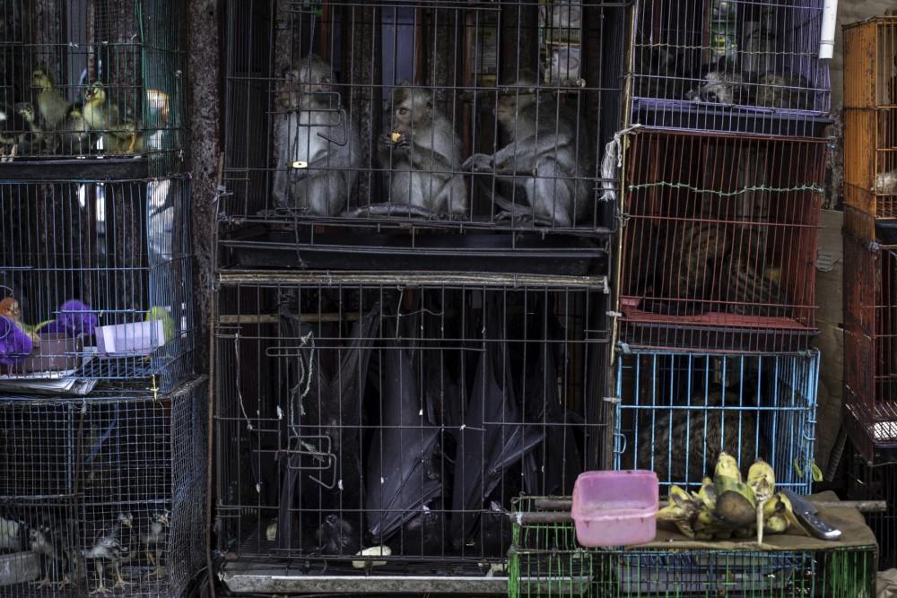 Markt waar wilde dieren verkocht worden
