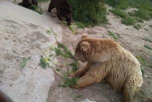 Organic farm grows carrots for Balkasar bears
