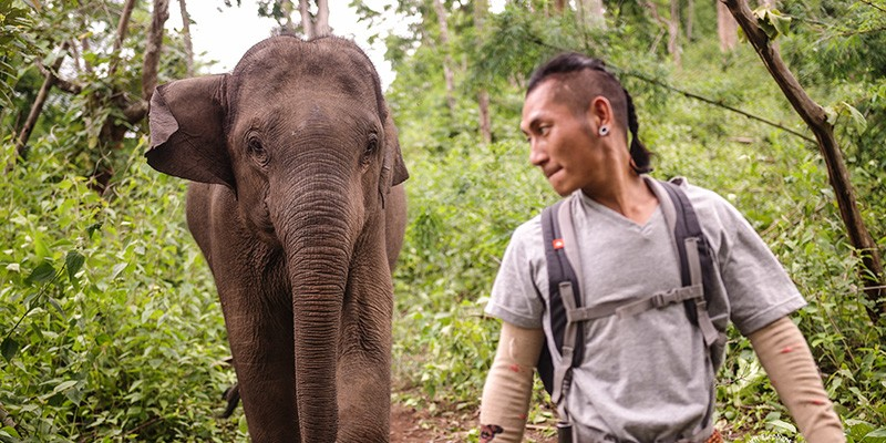 Elephant with his mahout at Kindred Spirit Elephant Sanctuary