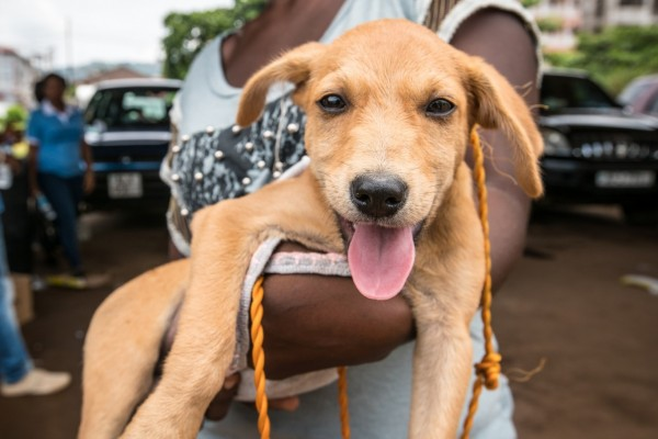 Dog at vaccination drive in Sierra Leone - World Animal Protection