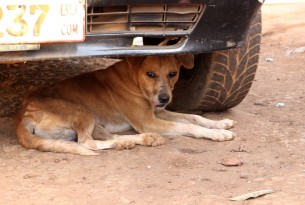 Help vaccinate dogs in Africa on World Rabies Day