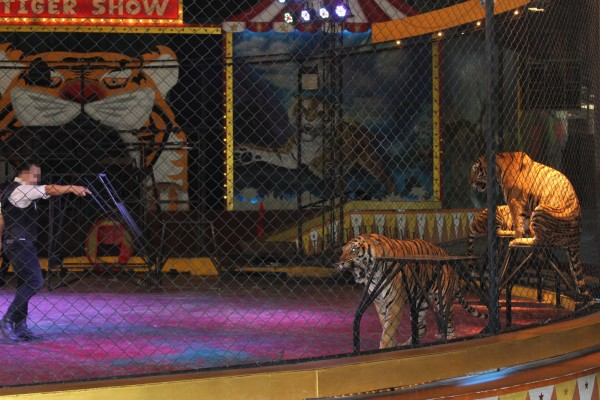 Tiger Circus - World Animal Protection