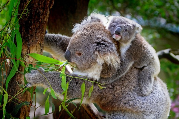 Where are the top spots to see Australian animals in the wild?