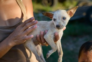 Dog in the Philippines - Animals in disasters - World Animal Protection