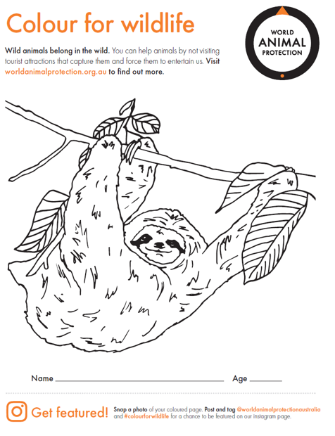 Activity sheet - color for wildlife sloth - World Animal Protection