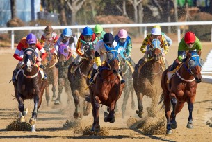 Horseracing is just plain cruel: Too many thoroughbreds are suffering