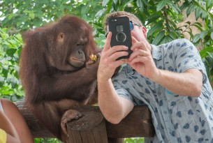 A tourist takes a selfie with an orangutan in Brazil - Wildlife Selfie Code - World Animal Protection
