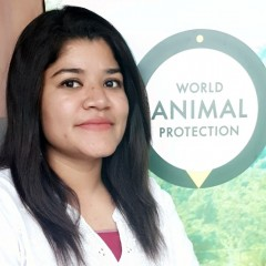 Campaign Officer for Animals in Farming