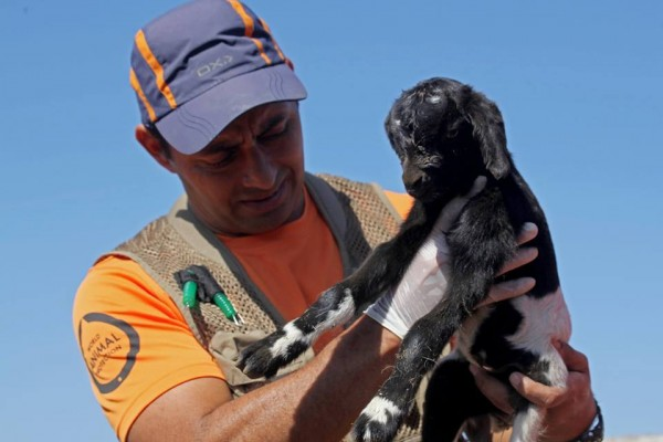 "World Animal Protection's Dr Vasquez holds ""Sergina\"" a newborn goat."