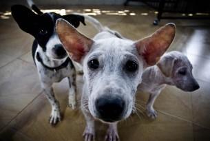 Trabalhe na World Animal Protection