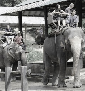 Tourists take rides on elephants in Thailand