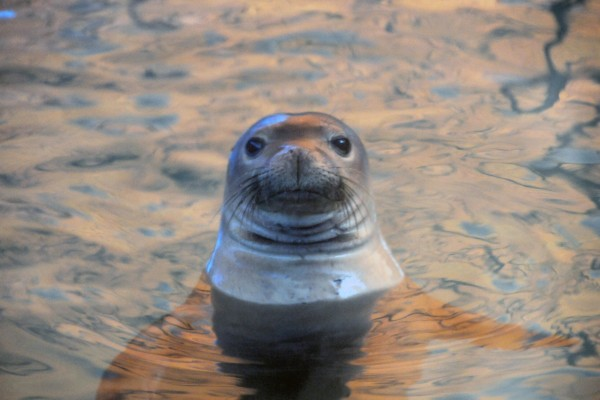 Seal in water