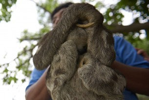 Sloth selfies: how we discovered the true impact