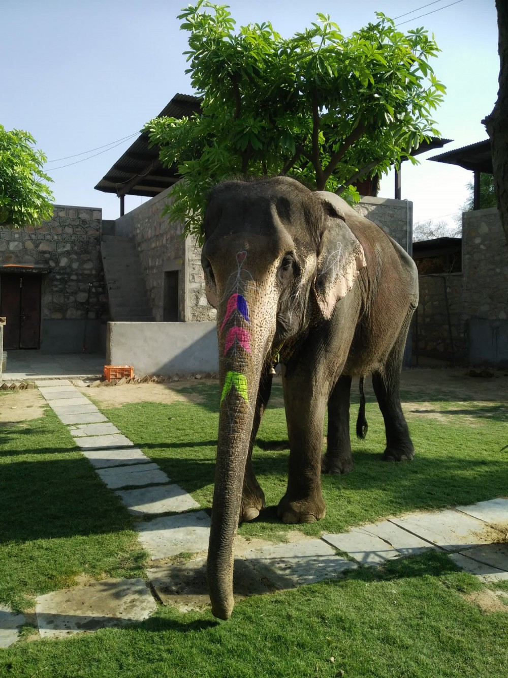 Elephant standing on grass at Amer Fort, India - World Animal Protection - Wildlife. Not entertainers