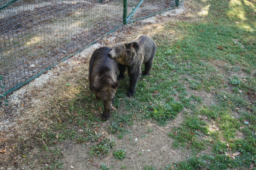 Katia and Dasha are free at last in the Libearty Bear Sanctuary.