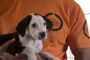 A small white and brown puppy is held by a World Animal Protection staff member wearing an orange t-shirt