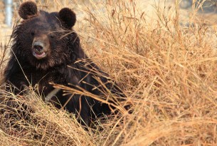 Stop cruelty to bears