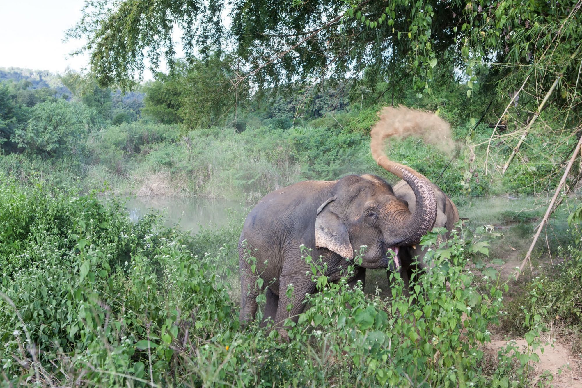 Elephant friendly venues:  Better for elephants and people