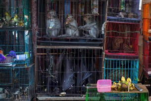 Macaques, bats, and civets at a market in Jakarta, Indonesia. Photographer: Aaron Gekoski