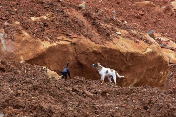 Dogs on top of a mud slide in Sierra Leone