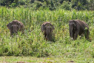 What are elephant-friendly tourist venues