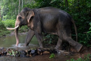 Elephant riding and bathing now 'unacceptable' in latest travel association guidelines