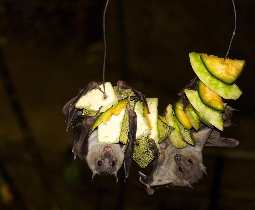 Por Que Defender Gambas Morcegos E Lagartixas World Animal Protection