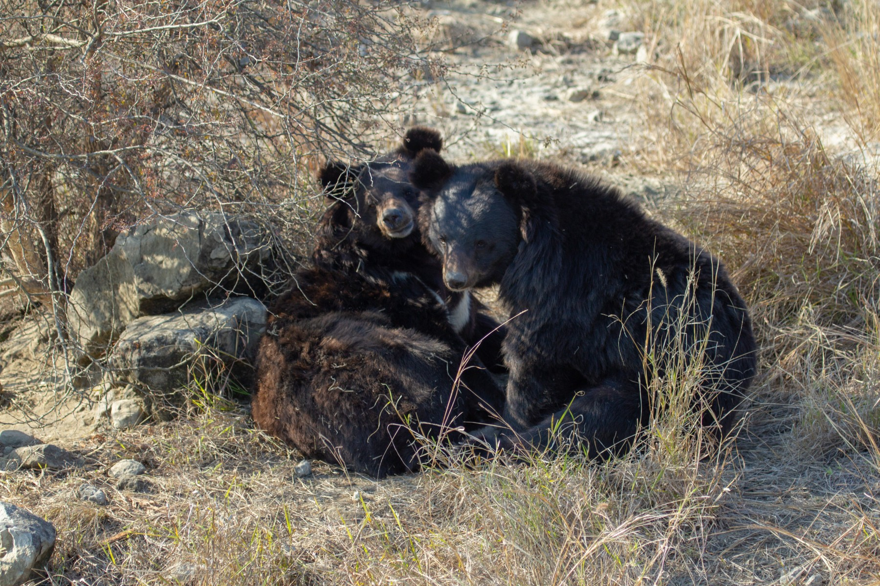 Pictured: Two rescued bears in our partner sanctuary.