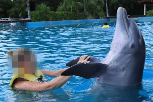 Dolphin in captivity in Mexico