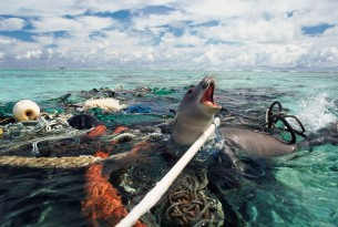 Ghost gear haunting animals in our oceans