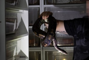 Pictured; Ball python breeder, Czech Republic. Credit Line: World Animal Protection / Aaron Gekoski