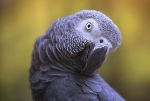 African grey parrot in the wild - World Animal Protection - Wildlife. Not pets