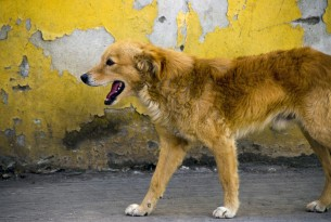 World Animal Protection - a dog in Puebla, Mexico - Better Lives For Dogs
