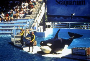 orca show in USA