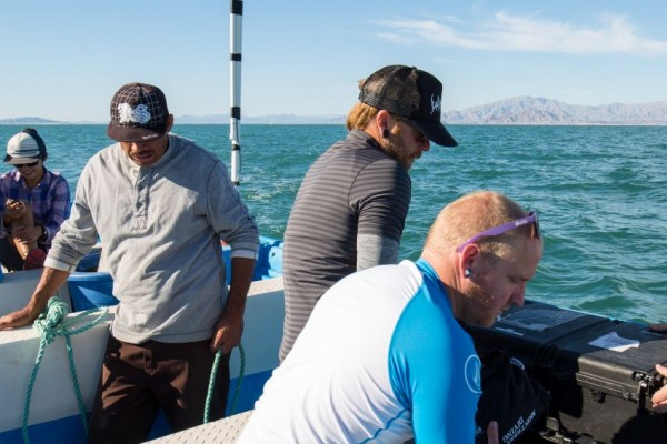 Hope for vaquitas