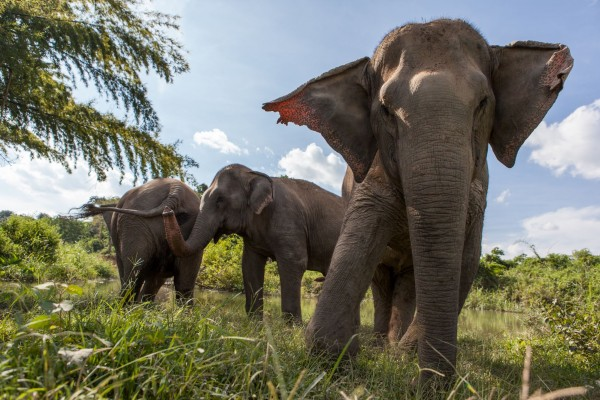 Global movement grows: more than 160 travel companies commit to be elephant friendly