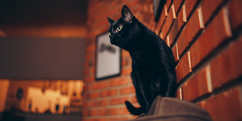 A black cat sitting on the back of a brown chair, against a naked brick wall