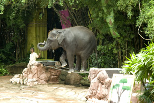 5 myths about elephant rides and shows