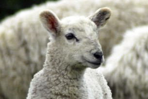 New Zealand ia a world leader in animal welfare