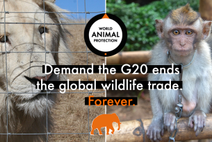 End the Global Wildlife Trade. Forever.