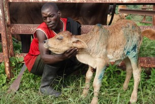A man with his young calf, which has received veterinary treatment at a World Animal Protection organised assessment in the Dolo district of Malawi following flooding.