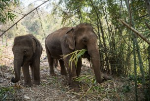 """Happy Elephant Care Valley in Chiang Mai, Thailand\"""