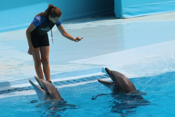 Dolphins in entertainment at Zoomarine, Portugal - World Animal Protection - Dolphins in captivity