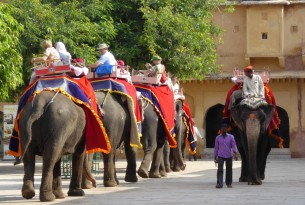 Offers Technical Support to Develop Model Rescue Centre for Elephants