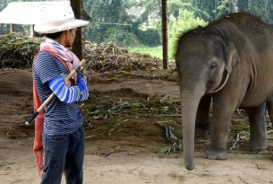 Protect elephants from cruel tourist entertainment on World Animal Day