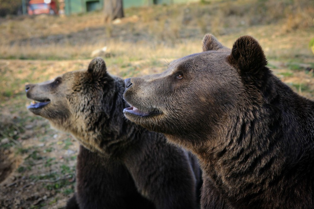 Bears at one of our supporter-funded sanctuaries
