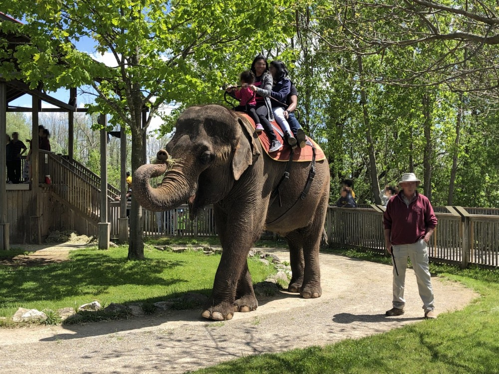 Elephant riding at African Lion Safari