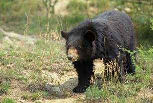 The Balkasar bear sanctuary will be extended