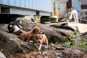 zwerfpuppies in Sierra Leone