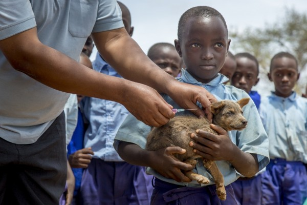Puppy getting rabies vaccination in Kenya - World Animal Protection